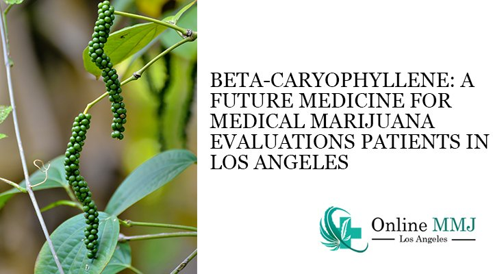 Beta-Caryophyllene: A Future Medicine for Medical Marijuana Evaluations Patients in Los Angeles