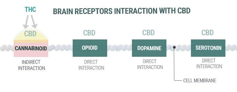 cbd-receptors-interaction