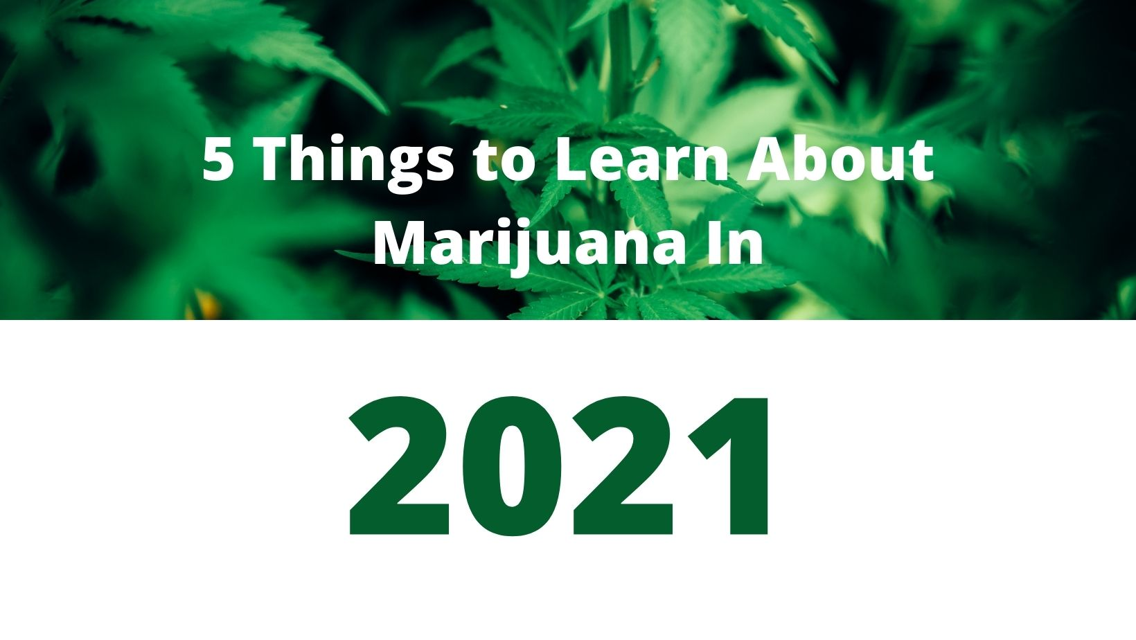 5 Things You Must Know About Medical Cannabis in 2021